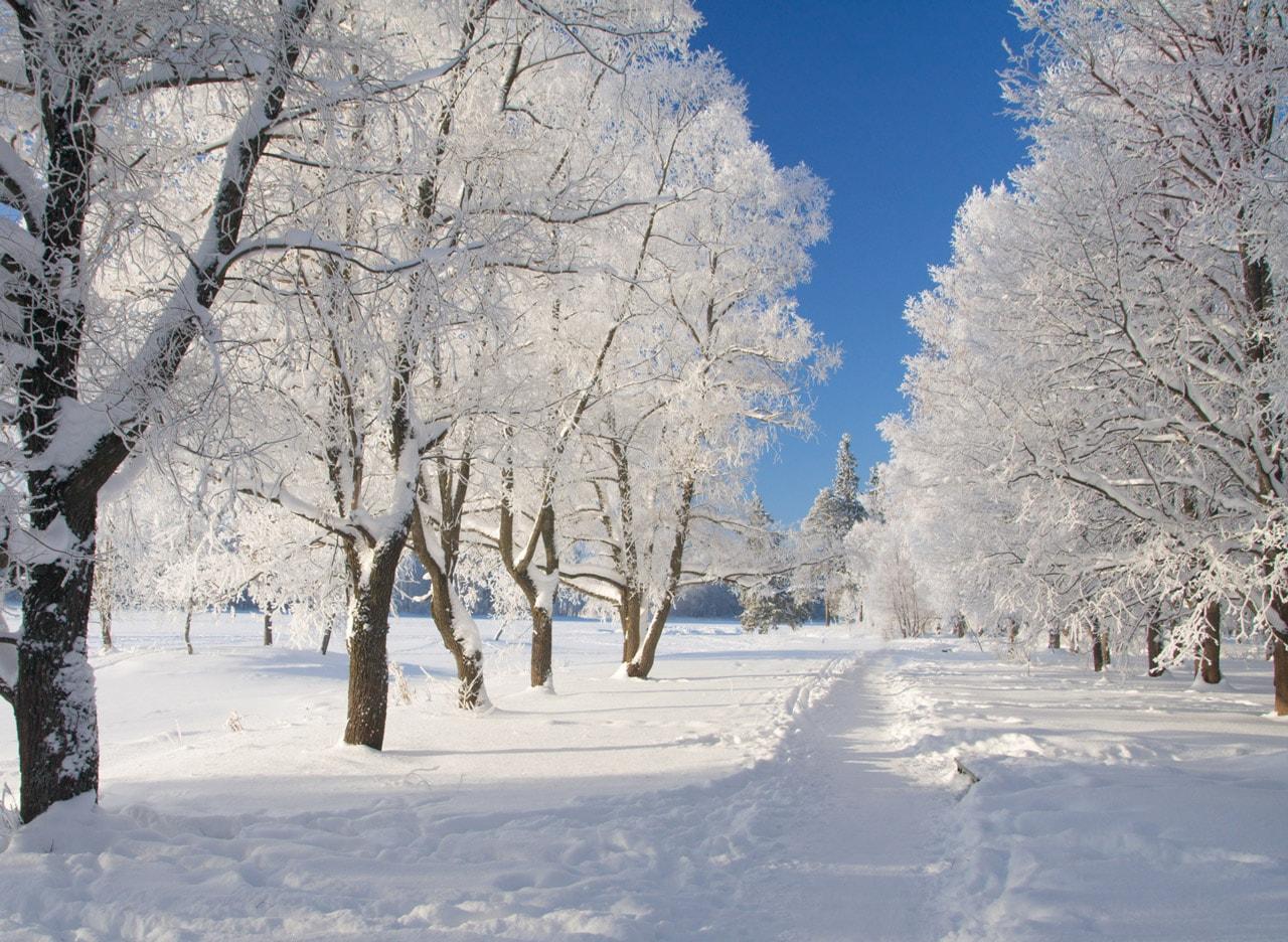Dromen Over Sneeuw En Ijs Drs Karin De Korte Munk